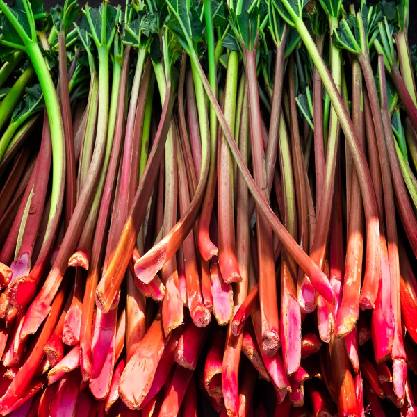 Confiture de rhubarbe, un délice de votre épicerie fine